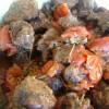 Bourguignon tomate et fines herbes (sac de cuisson)